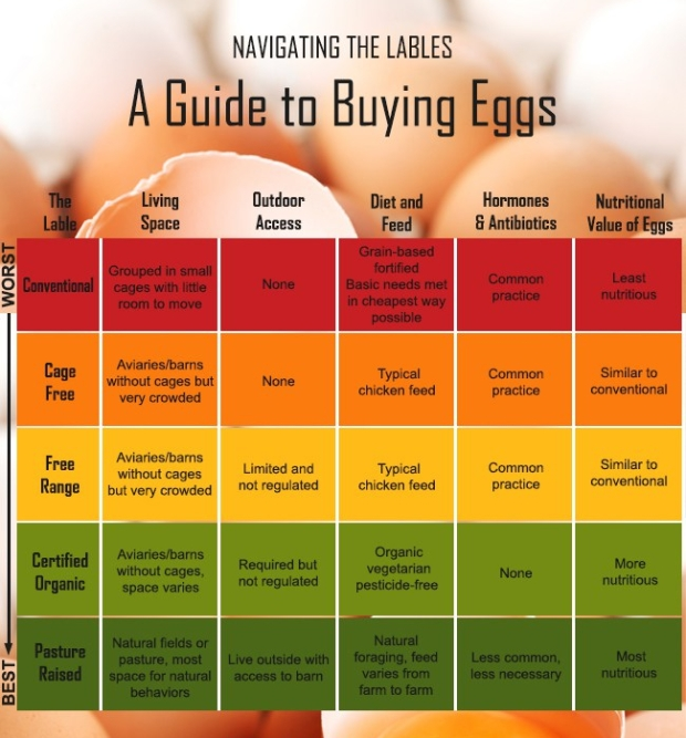 navigating-the-lables-a-guide-to-buying-eggs.jpg
